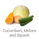 cucumbers_melons_and_squash