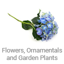 flowers_ornamentals_and_garden_plants