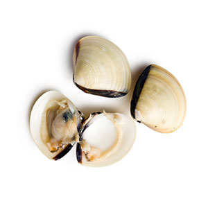 Farmed Shellfish