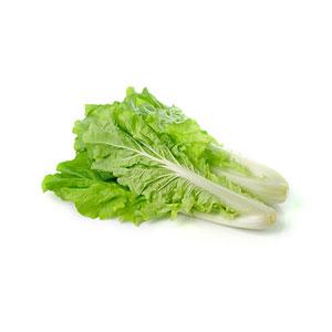 Lettuce and Leaf Vegetables