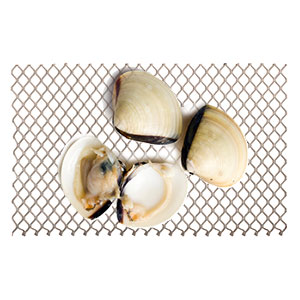 Wild-Caught Shellfish