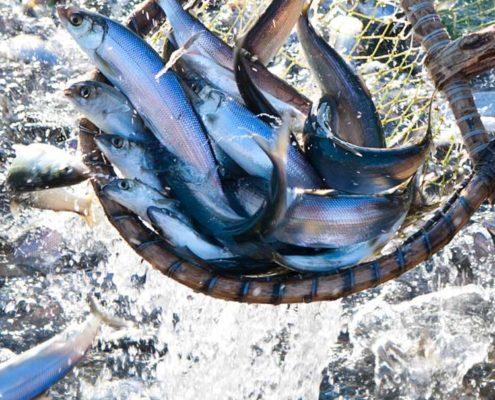seafood-thumb